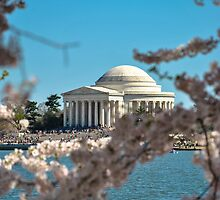 Cherry Blossom at Thomas Jefferson Memorial 2 by Gustavo Bernal
