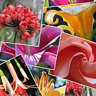 Floral Collage by Pat Yager