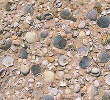 Seashell City by Bethany Helzer