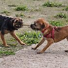 Doggy Tug Of War. by Jazzdenski