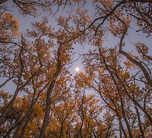 Fall Moon by IOBurque