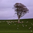 Spiral of Sheep by Kate Purdy
