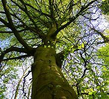 The Spooky Tree by Fara
