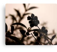 raindrops and hedge berries Metal Print