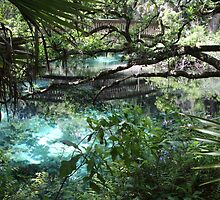 Fern Hammock Springs by Carol Bailey White