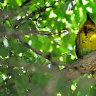 Yellow serenade by Karen01
