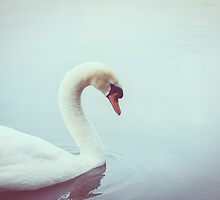 The Swan by pascalplus