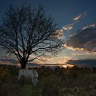 Pony at Rhinefield by nick board