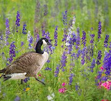 Canada Goose in Wildflowers by Bonnie T.  Barry