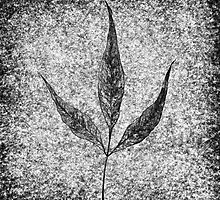 leaf 3 by Alberto Cogo