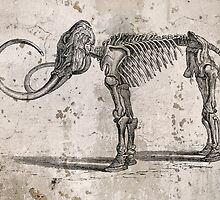 Mammoth Skeleton by koping