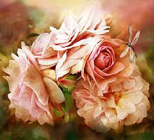 Miracle Of A Rose - Peach by Carol  Cavalaris