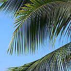 Palms: Kona, Hawai'i by Sally Kate Yeoman