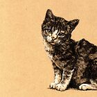 Kitten by Keiran Chang