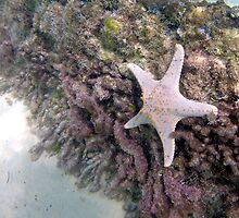 Starfish on a shipwreck by Meg Forbes