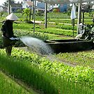 Watering your plot - Vietnam market garden by hans p olsen