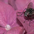Pink Flower, Black Fly by Mark Smith