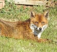 Freddie The Fox by Xanthia94