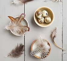 Feathers and eggs by Elisabeth Coelfen