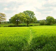 Fresh Green Fields by hootonles