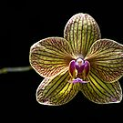 The Orchid by Adam Bykowski