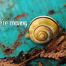 We're moving - Notice Card by vivendulies