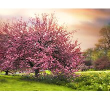 The Cherry Orchard Photographic Print