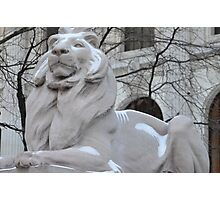 Library Lion Photographic Print