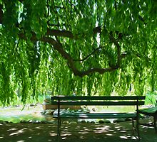 Willow Tree  by ashnicoleboots