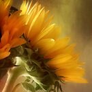 Good Morning Sunshine by John Rivera