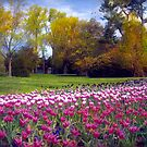 The Glory of Tulips by John Rivera