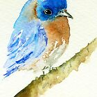 Bluebird Watercolour by archyscottie