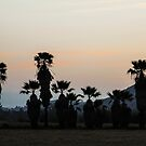 Palms At Dusk by heatherfriedman