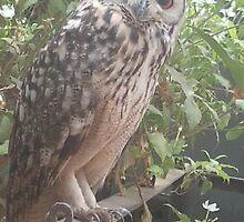 BANGELES EAGLE OWL by Rohit Kumar