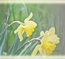 Spring Dreaming by Carolyn Clark