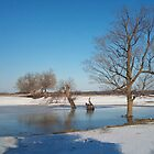 Lonesome Tree in Melting Ice  PLEASE VIEW LARGE. by vette