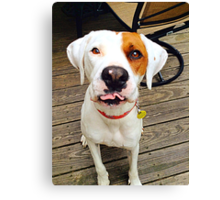 Zoey the Dog Canvas Print