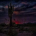 Saguaro Sunset by J. Michael Runyon
