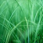 soft green grass by lockstockbarrel