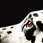The Amber Eye. Kokkie. Dalmation Dog by JennyRainbow