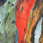 Colours of Bark by Kay Cunningham