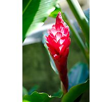 Red Ginger Flower Photographic Print