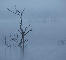 Misty Blue by BradBaker