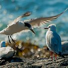 seagull party by jesskato