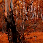 Bushland Abstract - NSW High Country - THe HDR Experience by Philip Johnson