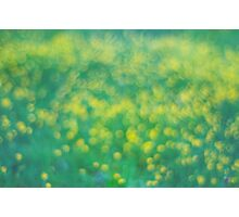 colors of spring Photographic Print