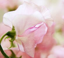 Lathyrus #2 by MaureenAstrid