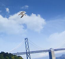 Seagull over the Willie Brown Bridge by David Denny