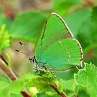 Little Green Butterfly by ienemien