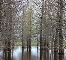 Swampy Trees by Elizadearg